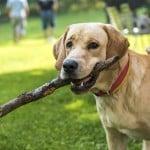 8 typów właścicieli psów, które znamy ze spacerów