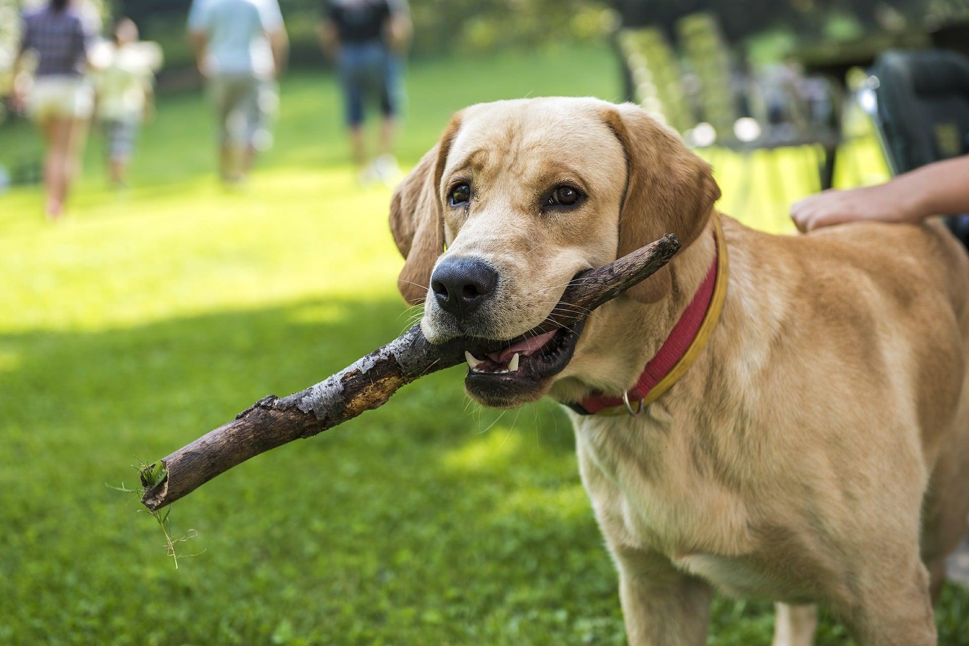typy właścicieli psów
