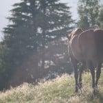 Lekcje, których udzielił mi koń