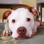 Czy rzeczywiście powinno się brać tylko psy ze schronisk?