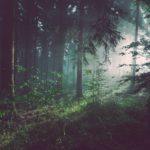 Lato leśnych ludzi – inspiracja na lato