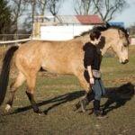 """Projekt Pasja – Valentina: """"koń ma do zaoferowania dużo więcej niż posłuszeństwo"""""""