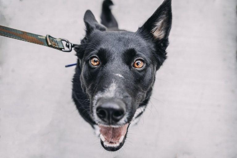 syndrom czarnego psa