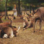 Syndrom Bambiego — zagłaskać na śmierć