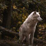 Książki o wilkołakach — najlepszy spis 23 powieści!