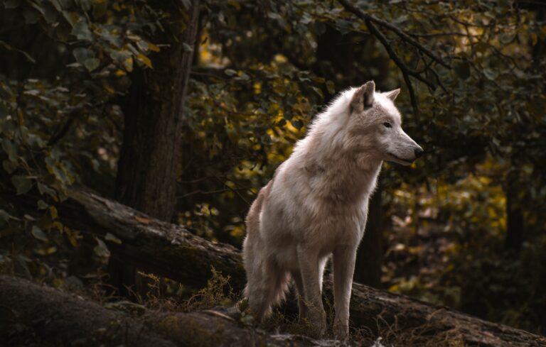 książki o wilkołakach