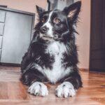 Pies z padaczką — jak wygląda wspólne życie?
