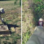 #2 Rok w pasiece: pszczoły na gigancie